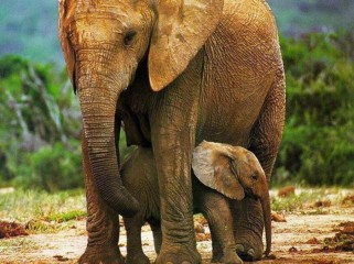 cute-baby-elephants-hd-wallpapers