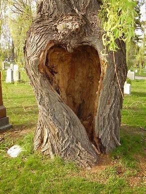 heart.tree
