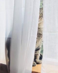 gannon.cat.belarus