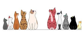 cats.1.isreali