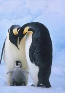 penguin.isreali