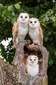 owl.poland