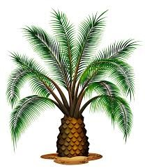 palm.3